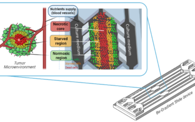 Tumour On Chip – From 2D models to advanced 3D microfluidic approaches